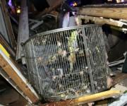 """FotografÌa del 27 de abril cedida por el diario local """"Log Cabin Democrat"""" hoy, lunes 28 de abril de 2014, que muestra un loro dentro de una jaula tras un tornado que azotÛ Mayflower, Arkansas, EE.UU. Al menos doce personas han muerto y numerosas han resultado heridas a causa de los tornados que han sacudido en las ˙ltimas horas varios estados del centro y el sur de EEUU, informaron hoy los medios. EFE/Courtney Spradlin"""