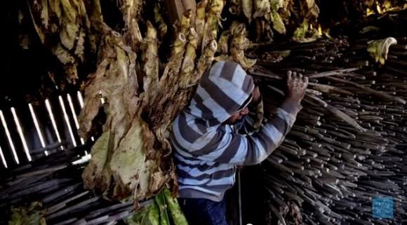 """Fotograma del vídeo """"Fabricado en EEUU: trabajo infantil y tabaco"""". HUMAN RIGHTS WATCH"""