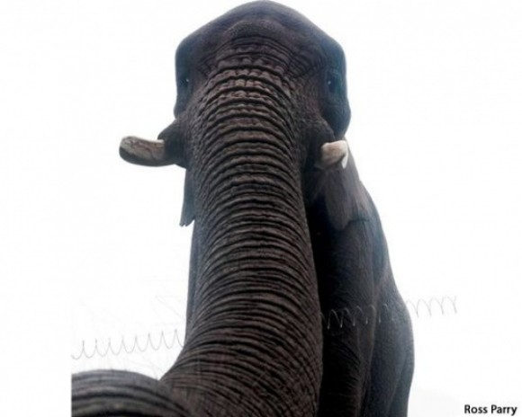Elphie Un elefante se toma una foto con teléfono celular