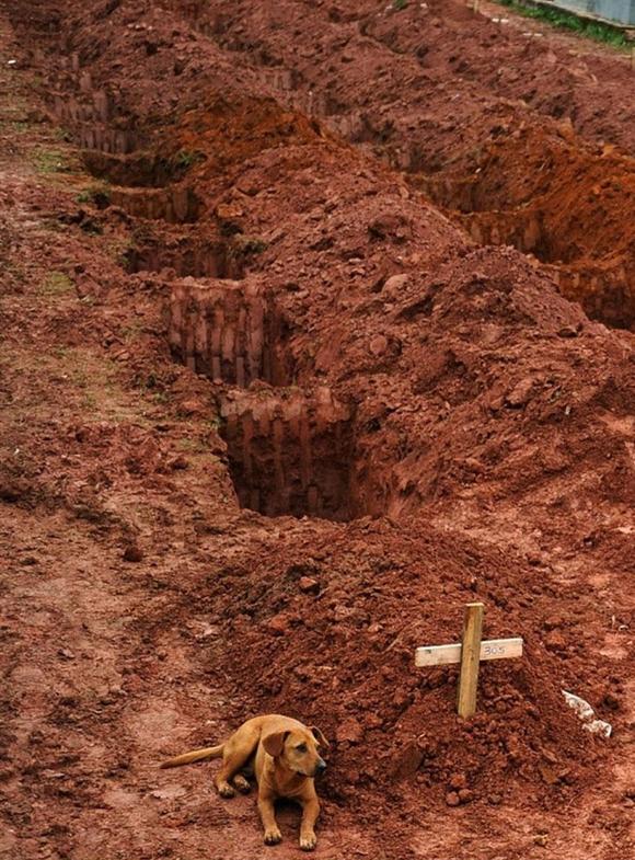 Este perro llamado Leao está junto a la tumba de su dueño, que murió debido a un desprendimiento cerca de Rio de Janeiro en 2011