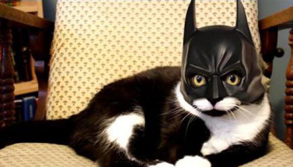 Gato super heroe