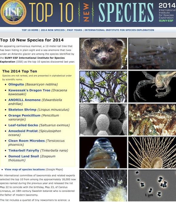 Top 10 Species | Top 10 New Species copia