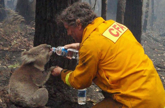 Un bombero le da agua a un koala depués de los inciendos infernales en Victoria, Australia, en 2009