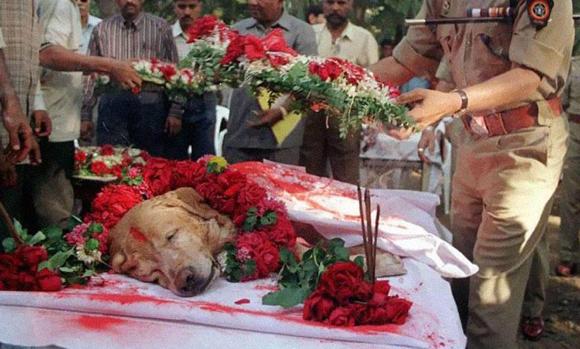 Zanjeer era un perro policia, y salvó millones de vidas detectando más de 4.000 kilos de explosivos en Mumbai, Marzo del 1993