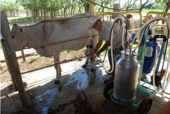 Silvino Ramos Santos, campesino productor de leche de vaca, beneficiado con el sistema de ordeño mecanizado, en la Finca Gasa e integrante de la Cooperativa de Créditos y Servicios (CCS) Conrado Benítez, de la Asociación Nacional de Agricultores Pequeños (ANAP), en el municipio Abreus, provincia de Cienfuegos, Cuba, 16 de mayo de 2014.   Foto: Modesto GUTIÉRREZ CABO/ AIN