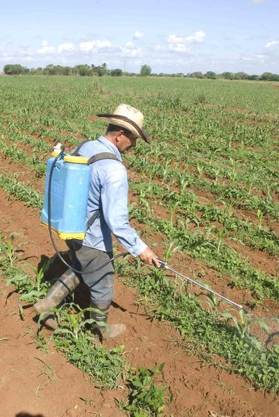 Pedro Valiente Rodríguez, campesino productor de granos, en la Finca Tanaguillo, integrante de la Cooperativa de Créditos y Servicios (CCS)  Patricio Lumumba,  de la  Asociación Nacional de Agricultores Pequeños (ANAP), en el municipio Abreus, provincia de Cienfuegos, Cuba, 16 de mayo de 2014.   Foto: Modesto GUTIÉRREZ CABO/ AIN