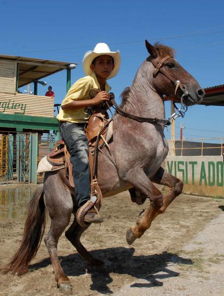 """Un niño demuestra sus habilidades en la monta de un Poni, durante la Feria """"Guajirito Soy"""", dedicada al campesinado cubano en su aniversario 55, en el recinto ferial agropecuario de Camagüey, el 16 de mayo de 2014. Foto: Rodolfo BLANCO CUÉ/ AIN"""