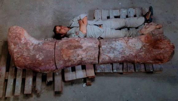 restos del dinosaurio más grande del mundo