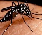 Los_casos_de_dengue_en_las_Americas_se_quintuplicaron_en_diez_anos