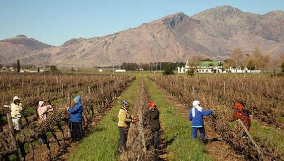 agricultura sudafrica