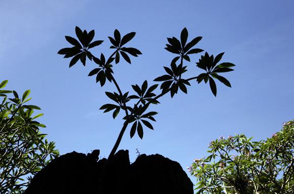Especies exóticas en medio de una isla tropical. Foto: Ismael Francisco/Cubadebate.