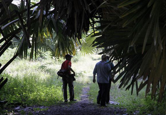 Avenida de las Coryphas. Foto: Ismael Francisco/Cubadebate.