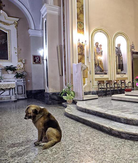 perro-iglesia1