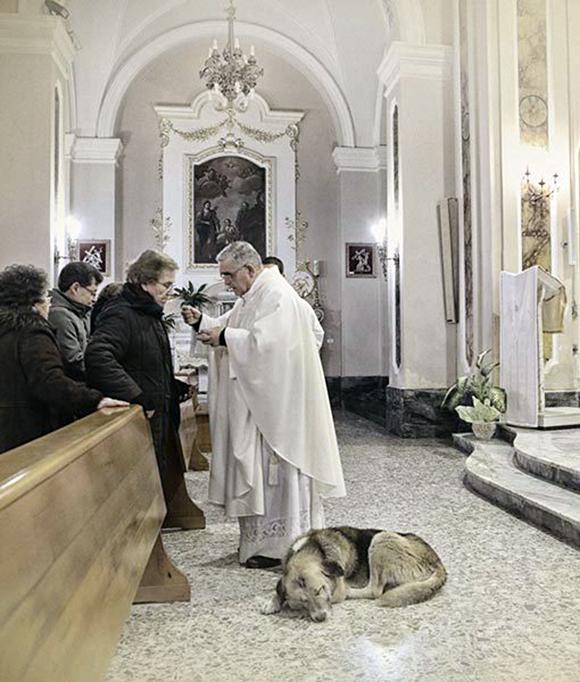 perro-iglesia2