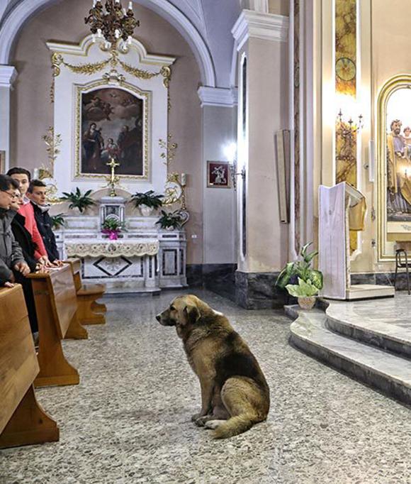 perro-iglesia3