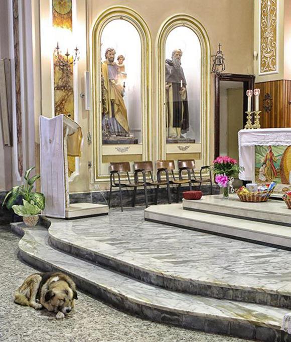 perro-iglesia4