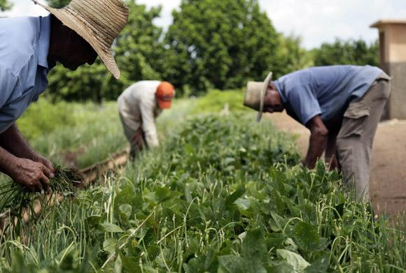 Trabajadores del organopónico Rigoberto Corcho López, de referencia nacional. Foto: Ismael Francisco/Cubadebate.
