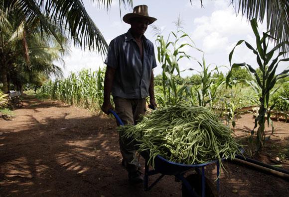 Trabajador del organopónico Rigoberto Corcho López, de referencia nacional. Foto: Ismael Francisco/Cubadebate.