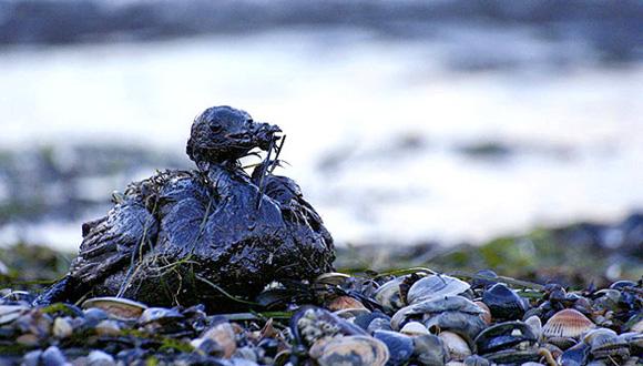 Persiste en la Antártida contaminación industrial del