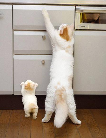 Si no llegas, no te perocupes, mamá está cerca para ayudarte.