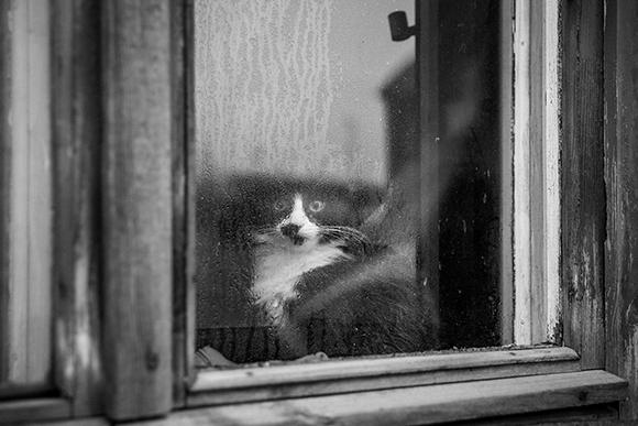 191 Los Gatos Son Igual De Cari 241 Osos Que Los Perros Cubadebate