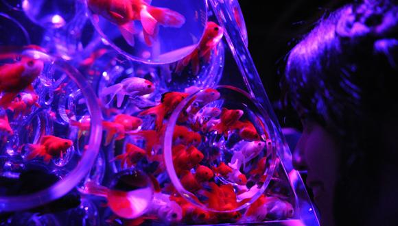 Exposición de imágenes peces en Japón. Foto: Xinhua