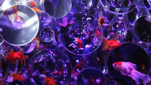 Exposición de imágenes de peces en Japón. Foto: Xinhua