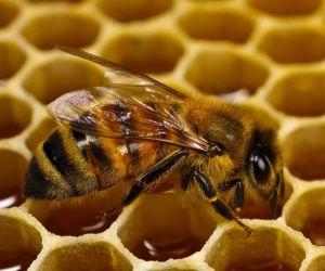 abejas-y-panales-de-miel-hexagonales