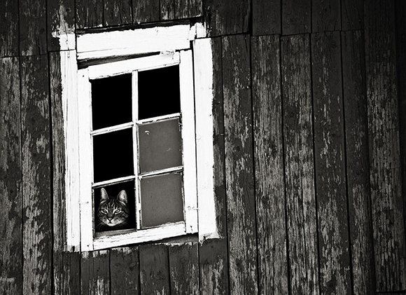 cat-waiting-window-19