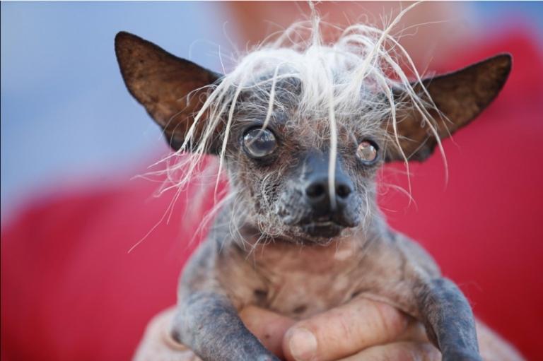 concurso de perros feos 2