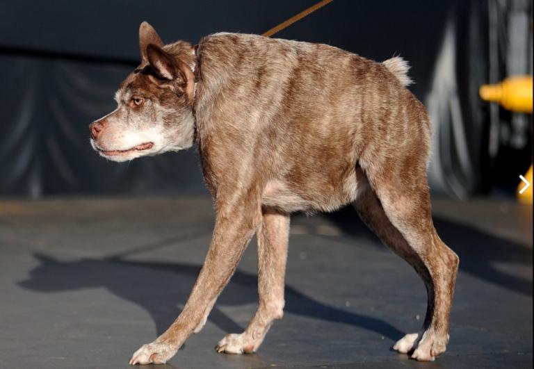 concurso de perros feos 6