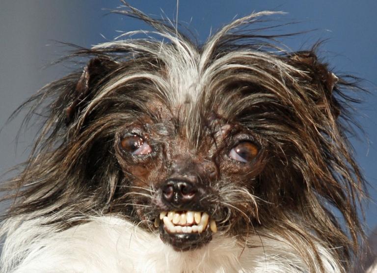 concurso de perros feos 9