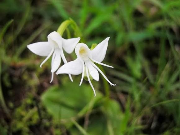 orquideas (1)