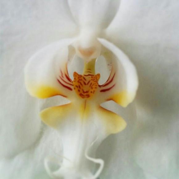 orquideas (11)