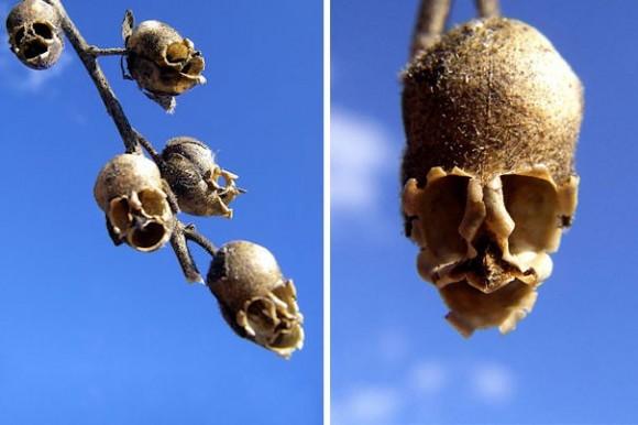 orquideas (2)