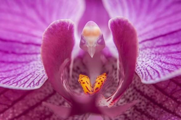 orquideas (6)