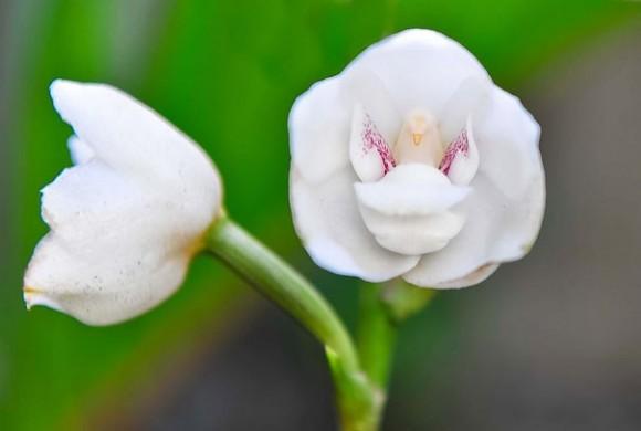 orquideas (7)