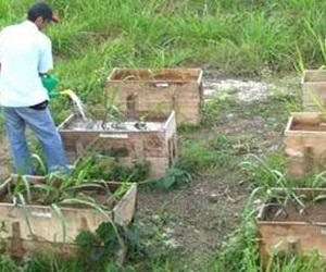 AZCUBA promueve por etapas la aplicación de un Proyecto integral inversionista para la solución ambiental en la industria azucarera.