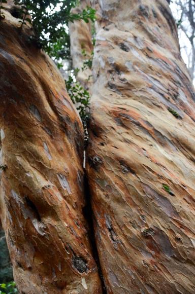 Bosque de Arayanes-12