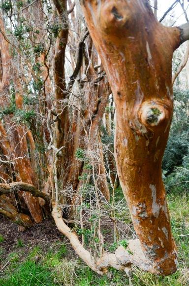 Bosque de Arayanes-14