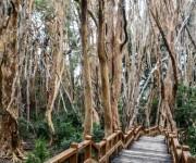 Bosque de Arayanes-15