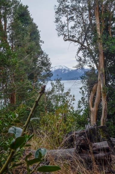 Bosque de Arayanes-2
