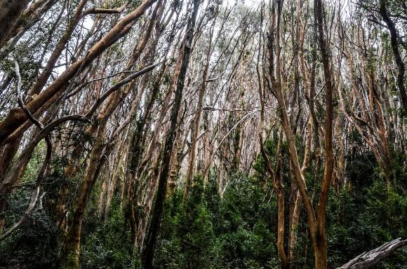 Bosque de Arayanes-3