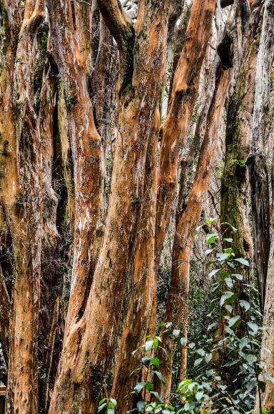 Bosque de Arayanes-4