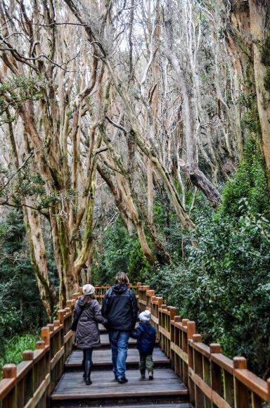 Bosque de Arayanes-7