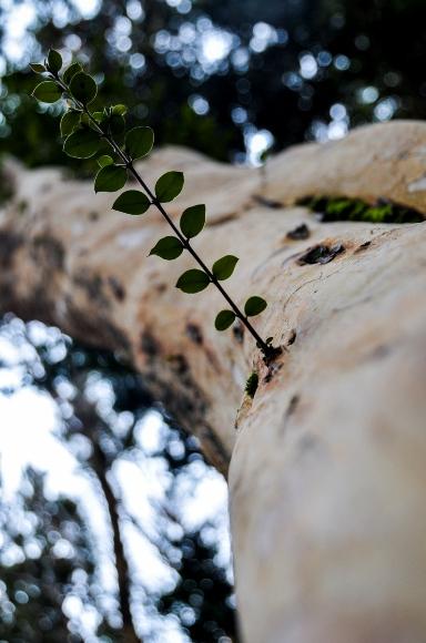 Bosque de Arayanes-8