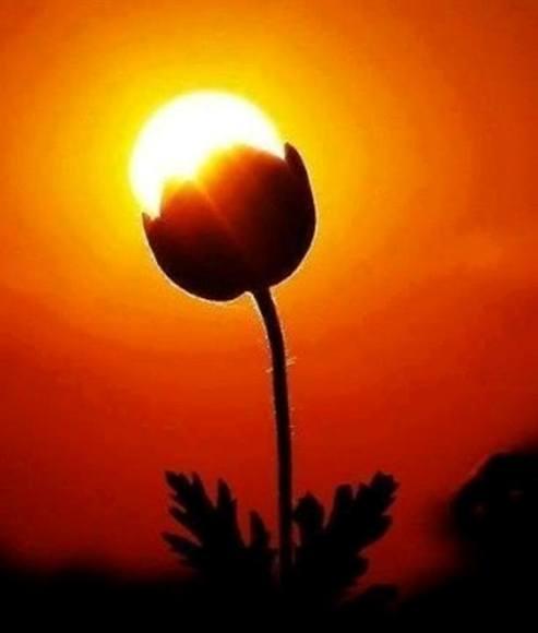 Jugando con el sol 6