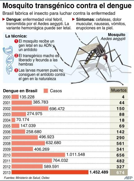 dengue brasil