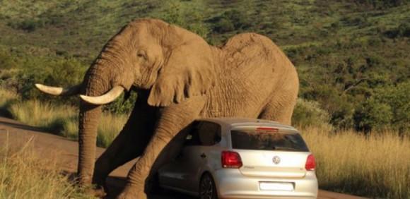 elefante sudafrica turistas 1