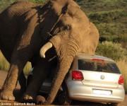 elefante sudafrica turistas 2